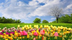 stock photo of colorful flowers in front of green grass field